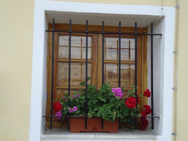 muškáty na okně